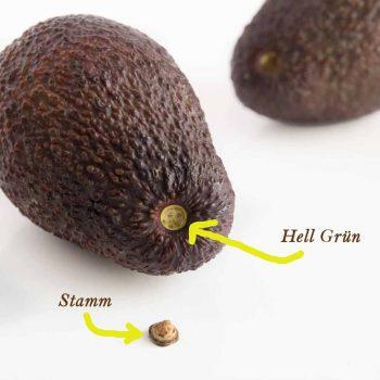 reife-avocado-erkennen